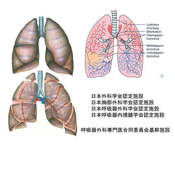 呼吸器外科トップの画像